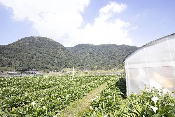 竹子湖綠山谷咖啡廳 - 24