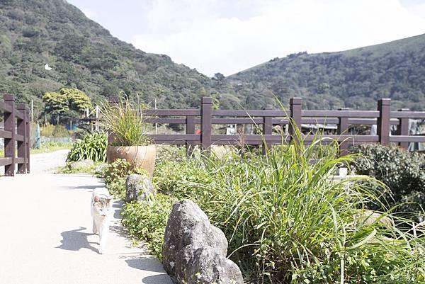 竹子湖綠山谷咖啡廳 - 23