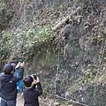 大阪近郊箕面瀑布 - 1
