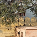 成群猴子聚集在殿外,信眾會他們祭祀過的餅或香蕉, 他們非常乖