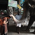 喔! 剛好看到~~大象代替神明賜福給你唷!!