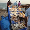 海灘邊很多賣貝殼的攤販