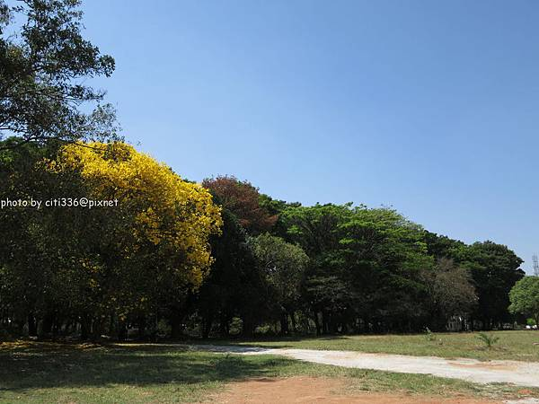palace的樹 (2)