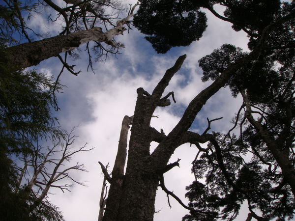 樹梢..特別