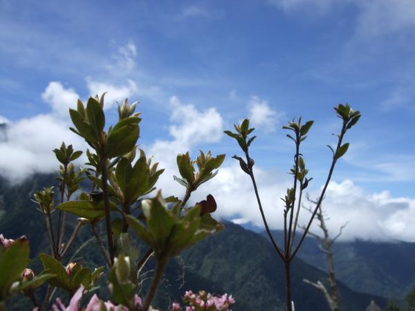 高山的植物,一年只長5公分