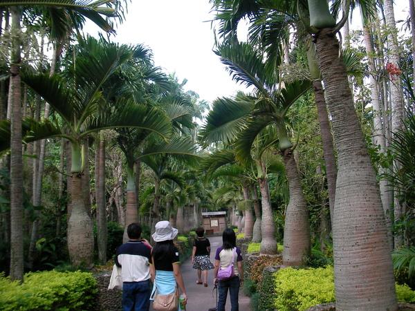 這裡就是椰林大道