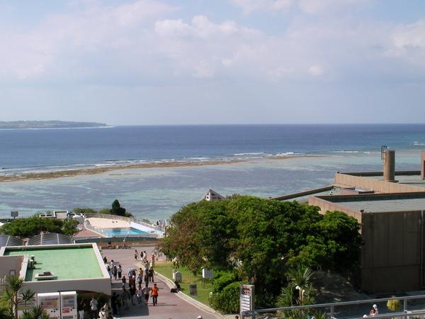 終於來啦!!沖繩水族館,我可是為了這個而來