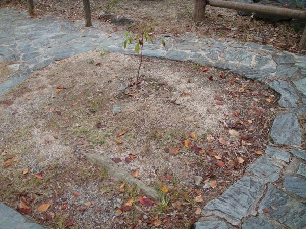 種樹,先圍出讓樹長大的空間