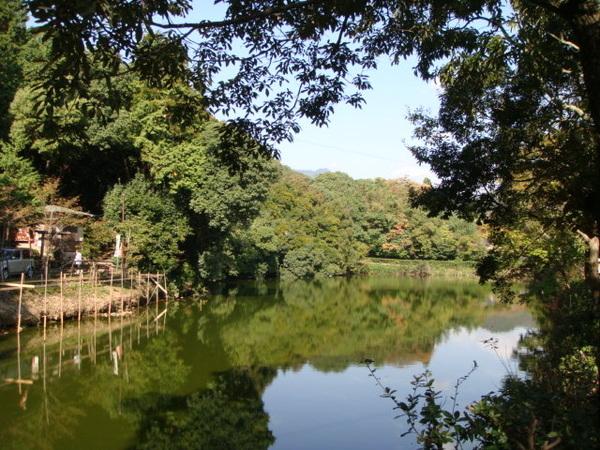 隨便一個池塘都可以詩情畫意