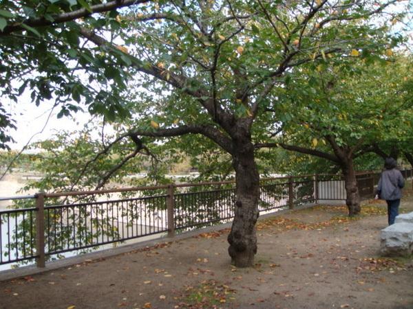 怎麼說呢? 覺得大阪人很幸福,有這麼雄偉漂亮的公園(入園免費,上大阪城才要錢)