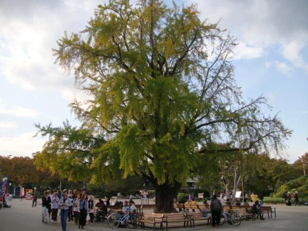 很大的樹,不知其名