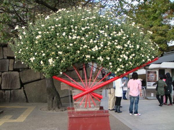 門口的扇形花藝