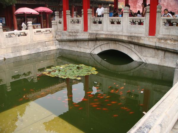 後花園的魚池
