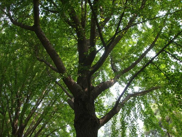 這種景色我最愛~我愛樹梢
