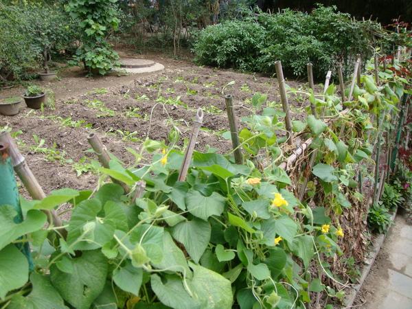 王府有蔬菜園現在還種蔬菜唷