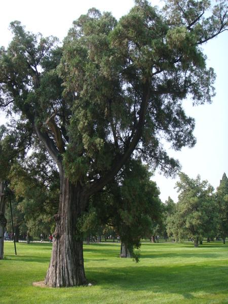 這樹真大啊