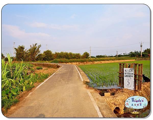 康莊農園(大王蓮)003.jpg