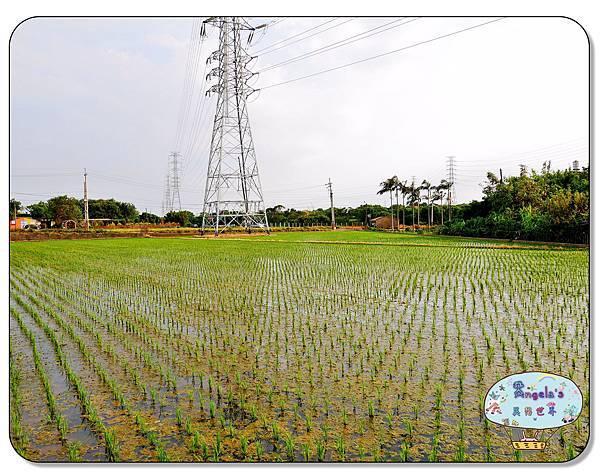 康莊農園(大王蓮)004.jpg