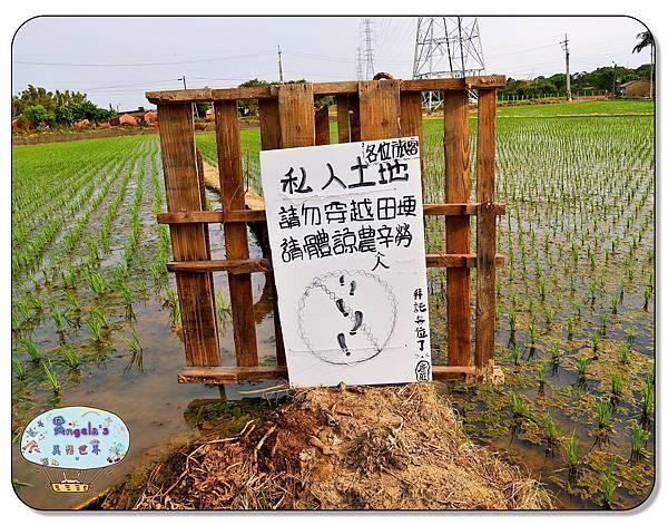 康莊農園(大王蓮)006.jpg