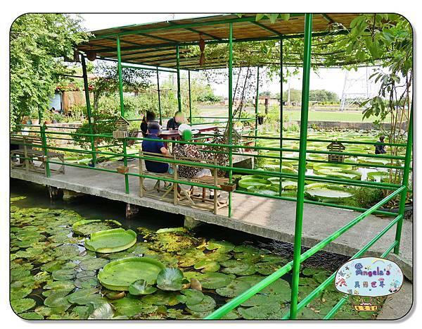 康莊農園(大王蓮)014.jpg