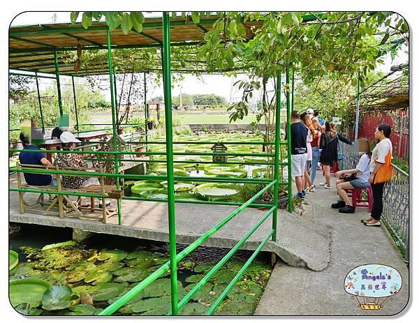 康莊農園(大王蓮)017.jpg