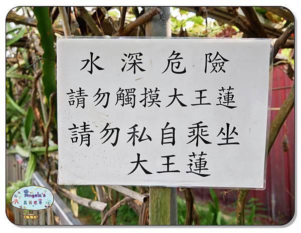 康莊農園(大王蓮)031.jpg