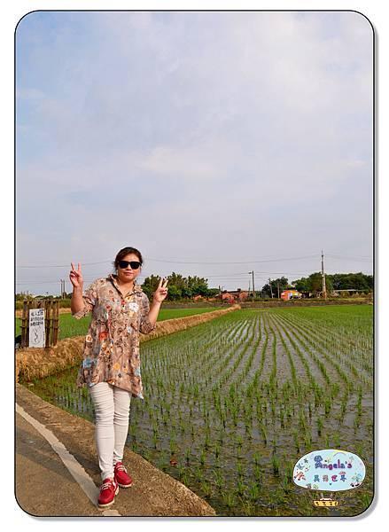康莊農園(大王蓮)036.jpg