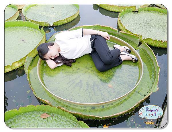 康莊農園(大王蓮)039.jpg