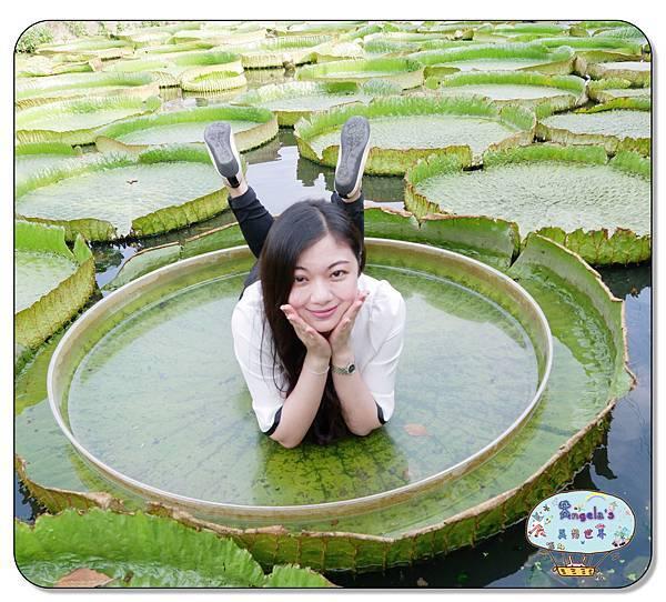 康莊農園(大王蓮)038.jpg