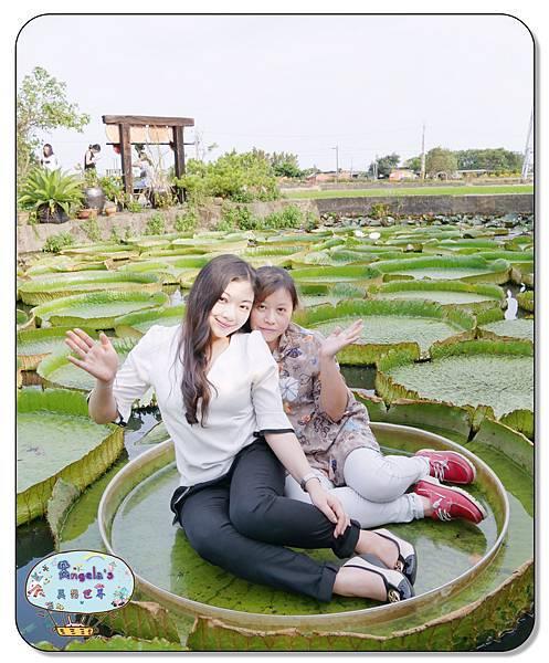 康莊農園(大王蓮)042.jpg