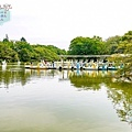 (2017年日本旅遊)東京(吉祥寺 いせや井之頭恩賜公園)046.jpg