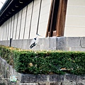 (2019年日本京阪神奈)京都東本願寺008.jpg