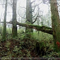 2009_0704_091146_blog.jpg