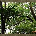 P6070108_blog.jpg