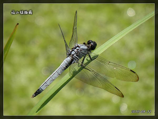 2010_0812_111839_blog.jpg