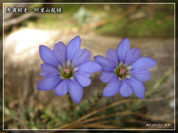 2010_0723_094538_blog.jpg