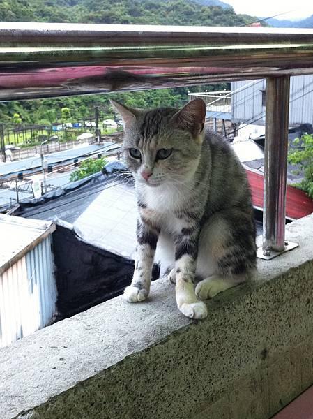 難得我也會覺得貓可愛