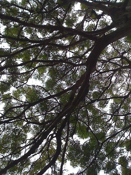 我的天空樹枝亂顫