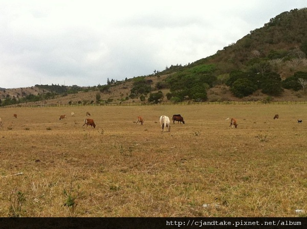 瑪雅之家外面就可以看到墾丁牧場