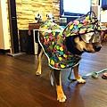 穿雨衣囉.JPG