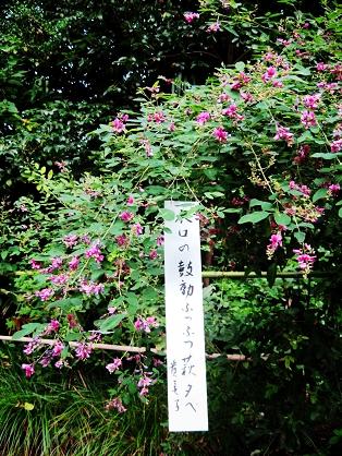 梨木神舍的荻花.jpg