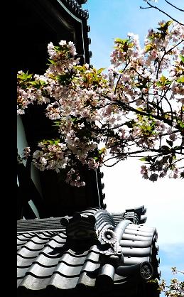 高台寺01.jpg