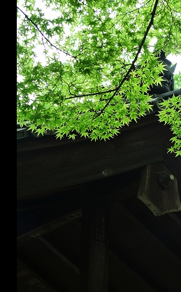 東福寺02.jpg