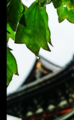 京都水.jpg
