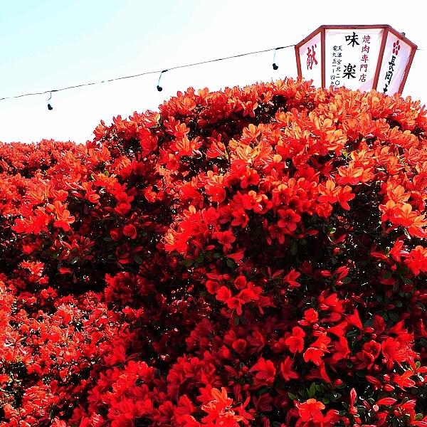 red01.jpg
