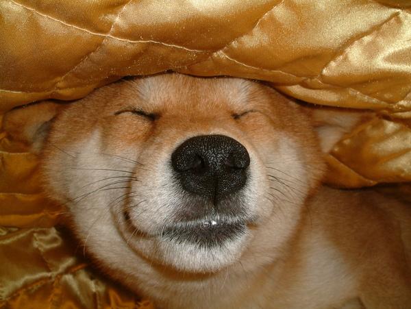 睡姿-仰睡
