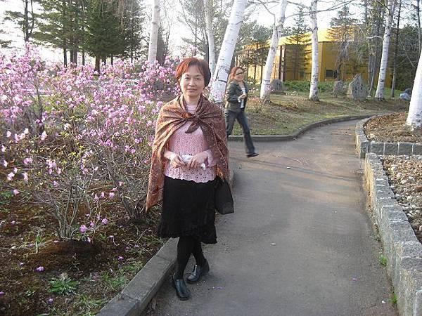 十勝幕別溫泉飯店前的杜鵑花.jpg