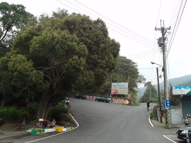 飛鳳山 (7).JPG