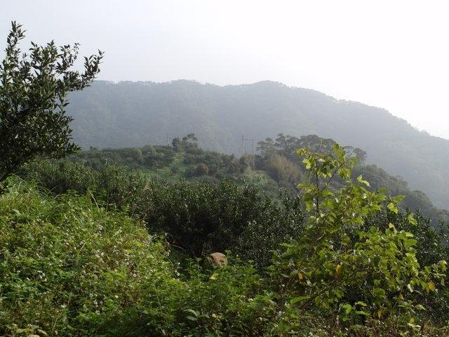 飛鳳山 (136).JPG