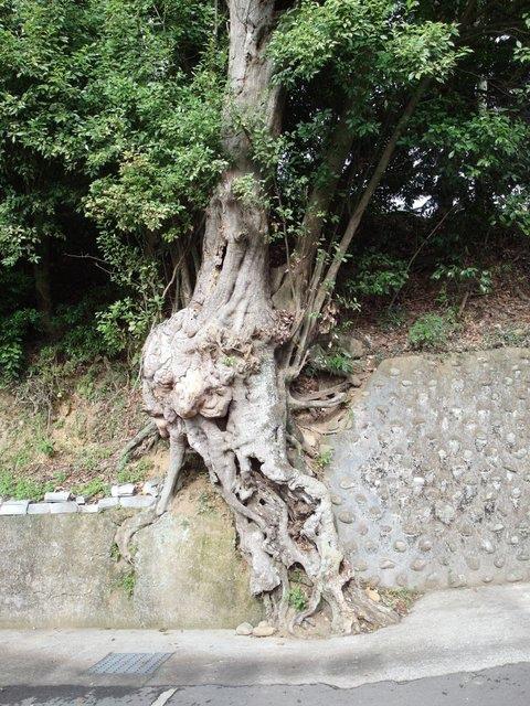 飛鳳山 (153).JPG